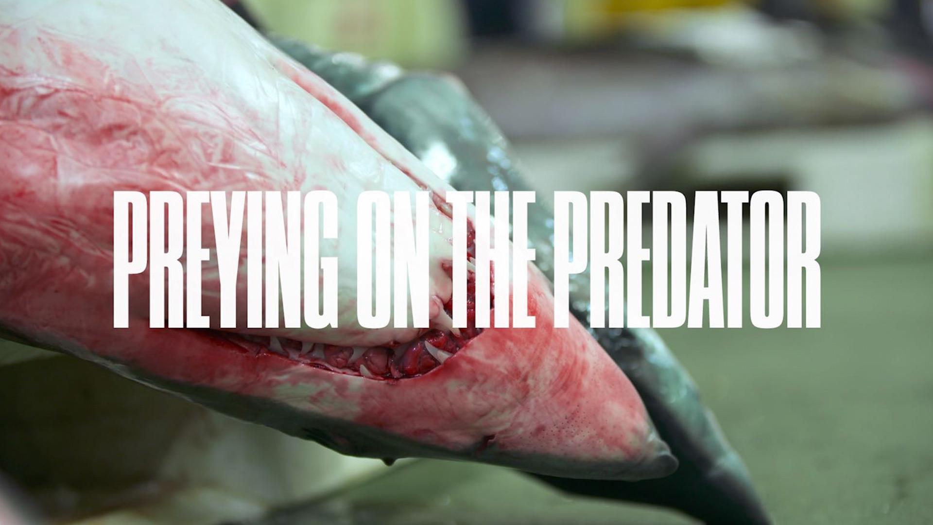 Preying on the predator